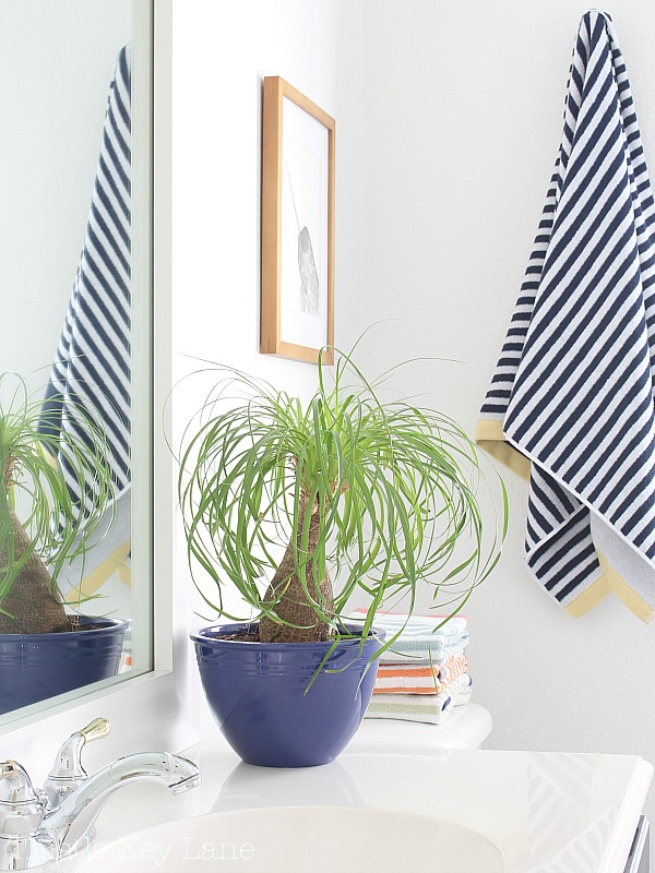 This plant will remind you to comb your hair.