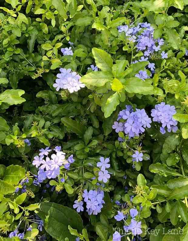 Beautiful flowers everywhere in Charleston, SC.