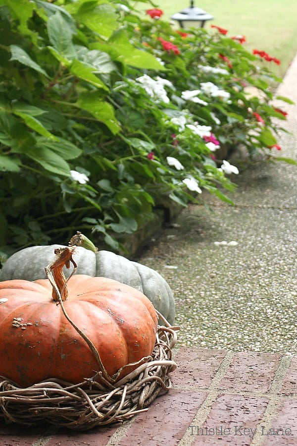 Big pumpkins in orange and gray with flowers in the background.