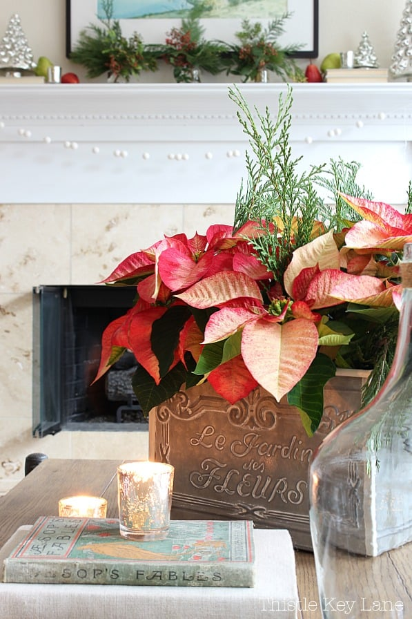 Poinsettia arrangement in a French tin box.