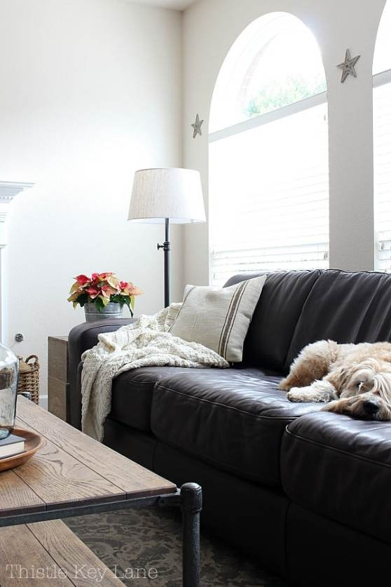 Leather sofa with cosy pillow, throw blanket and sleeping dog.