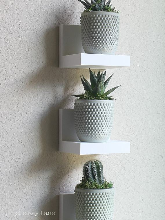 Mini succulent plants on white ledges.