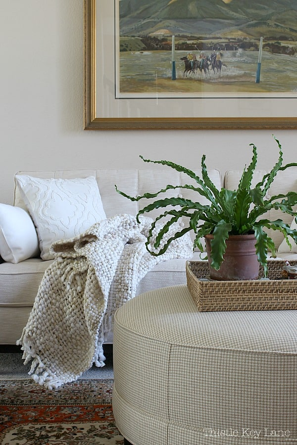 Plant on ottoman tray with cream sofa and blanket in background.