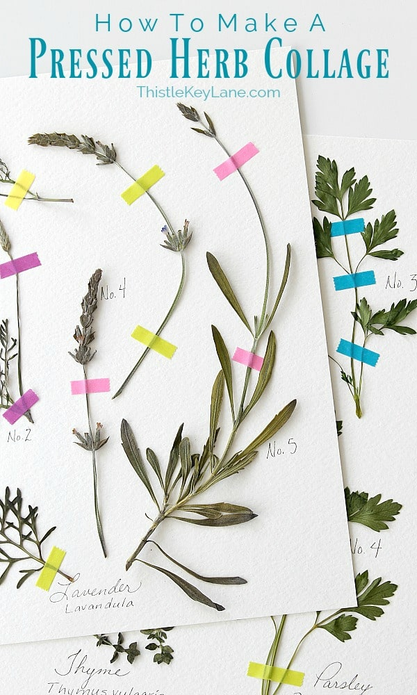 Pressed herb collage with bright tape.