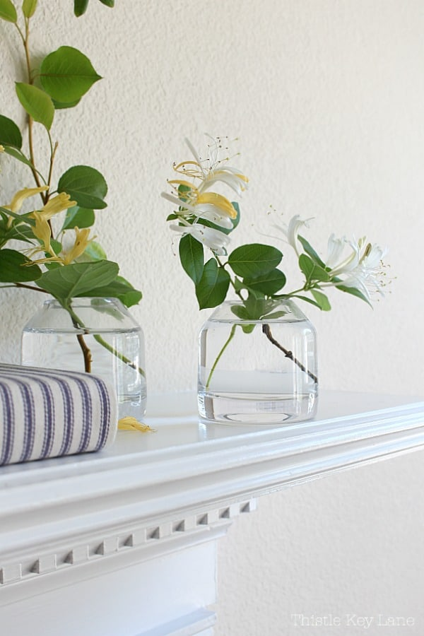 Clear vases holding honeysuckle clippings.