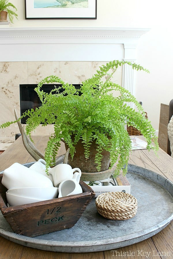 Vintage vignette with a fern.