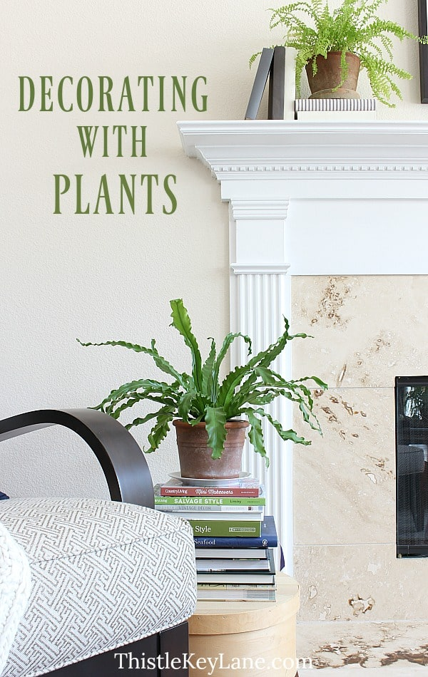 Ideas for decorating with plants.