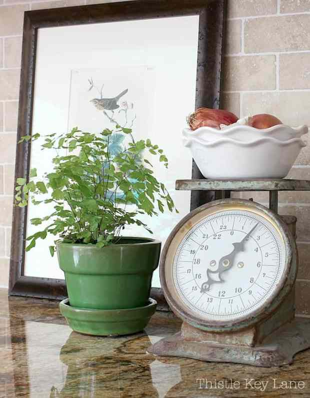Transitioning Summer To Fall Kitchen Ideas - plant, vintage scale and Audubon print.