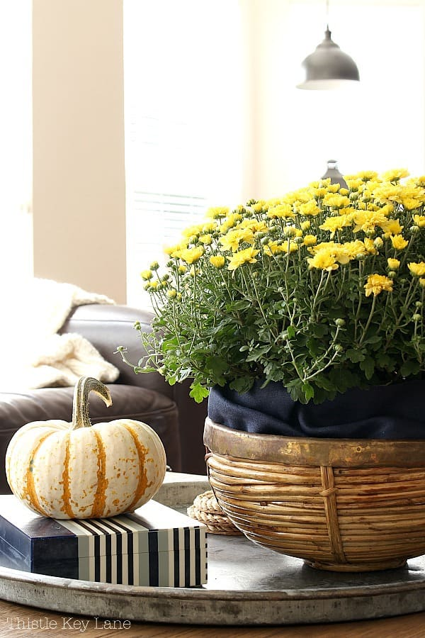 Fall Decorating With Mums And Pumpkins on the coffee table.