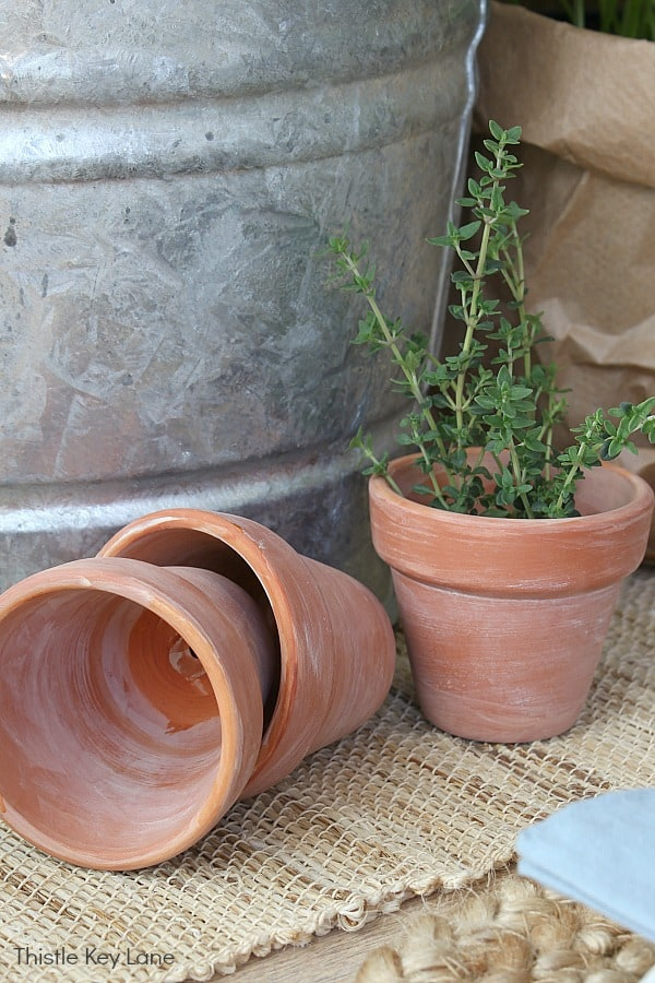 Small terra-cotta pots with sprigs of rosemary and thyme.