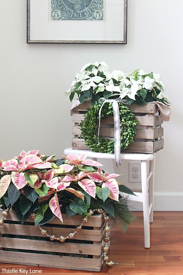 Crate holding poinsettias sitting on a chair and the floor.