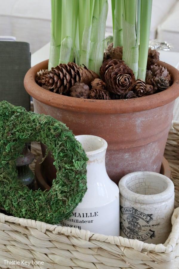 Ironstone jars next to a terra cotta pot.