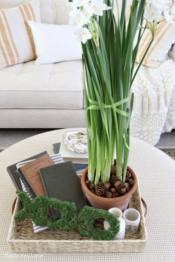 Potted paper whites and books on a tray. How To Make Moss Covered Letters For A Valentine Vignette.