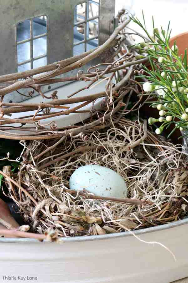 Bird nest with blue speckled egg.