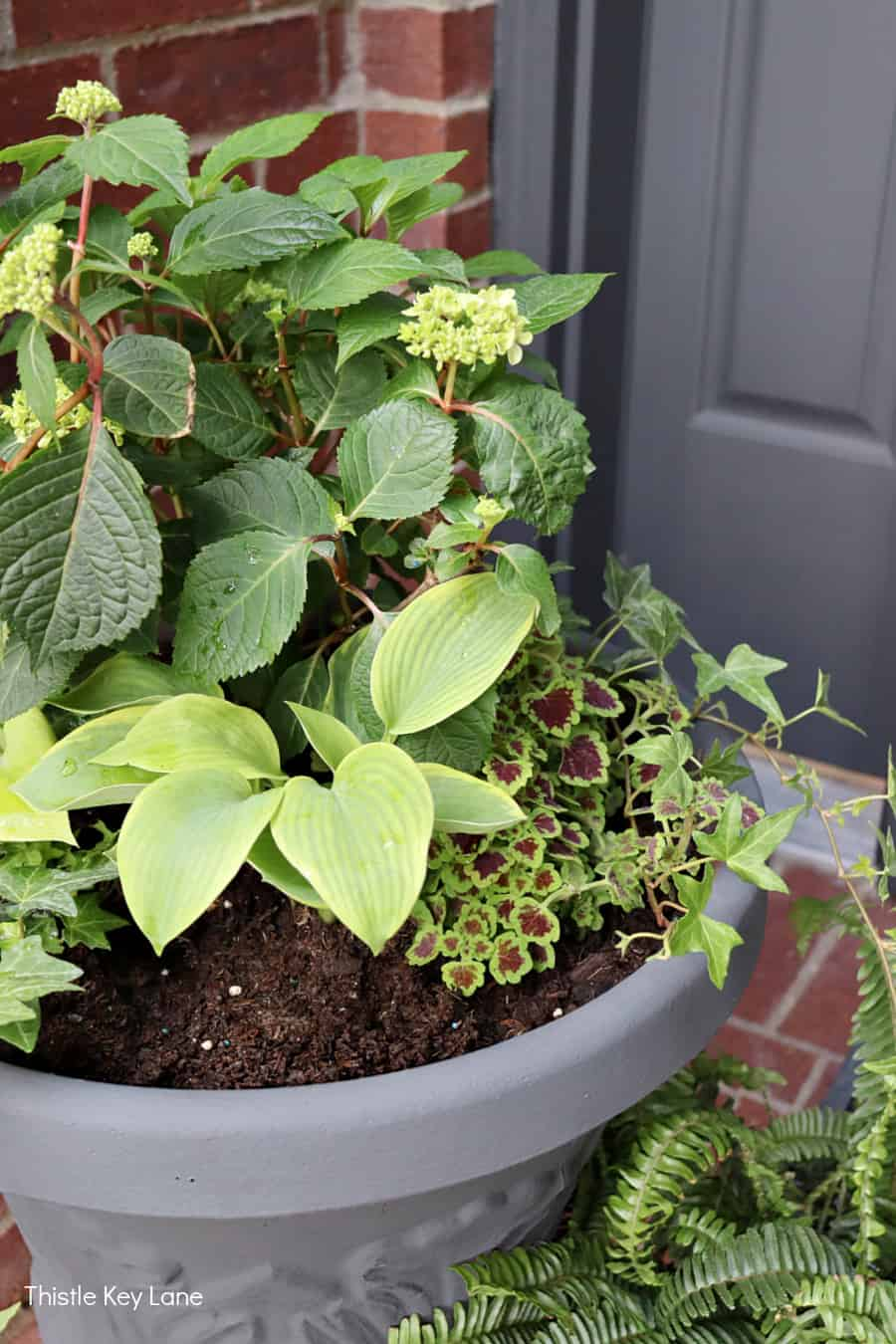 Pretty green plants in a garden container. Updating A Porch Planter For Spring.