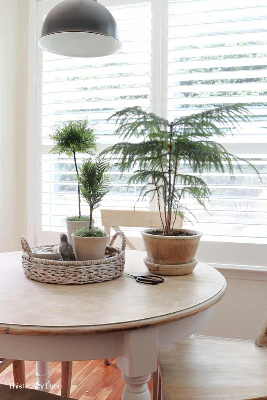 Faux topiaries and a Norfolk pine setting on a table. How To Create A Faux Topiary.