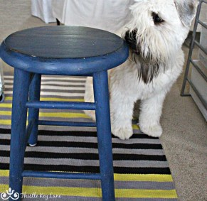 Old stool painted blue and Angus