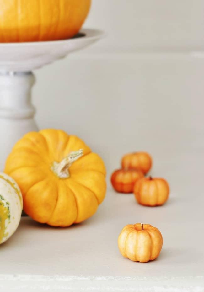 orange-tiny-pumpkins-fall