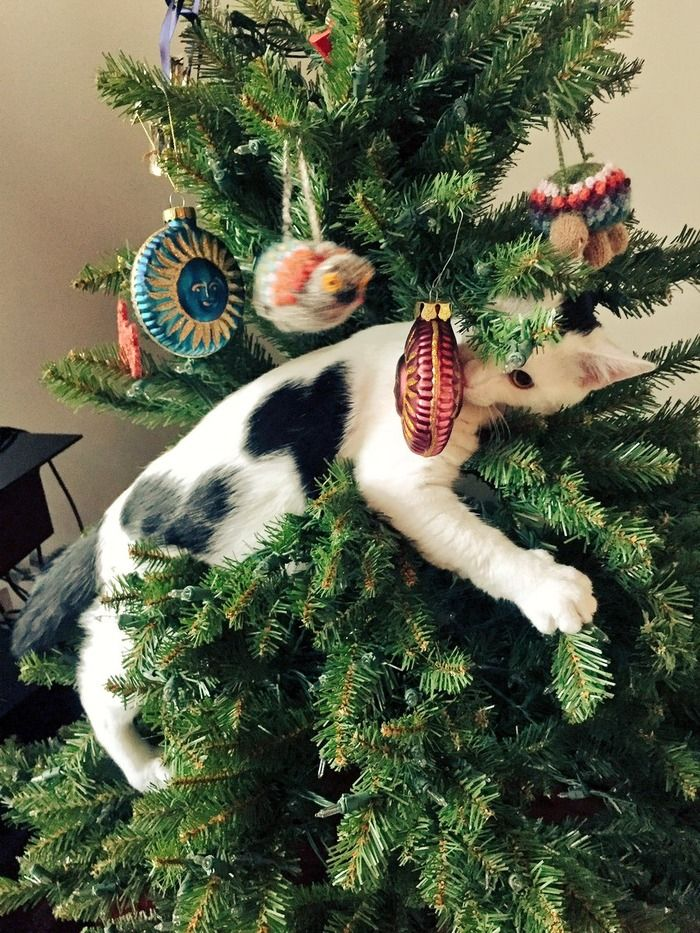 Cute Donkey Wallpaper Adorable Cats Who Are Excited About Christmas Trees This