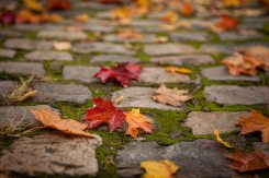 Valerie Jardin - Fall at Pere LaChaise-1