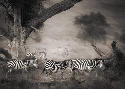 02_Against the Wind © Laurie Rubin_Africa Dust