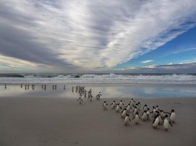 Saunders Penguin Emerge