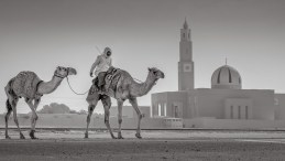 Camel and Mosque, Dubai