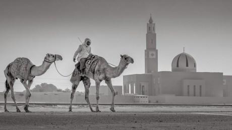 Camel and Mosque, Dubai