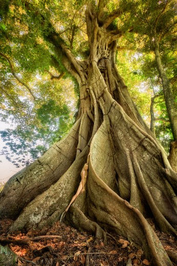 avatar-tree-treegirl-tkaweb