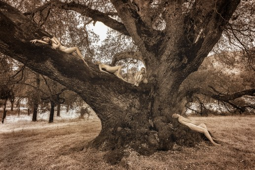 canyon-live-oak-maidens-12-30-16-tkaweb