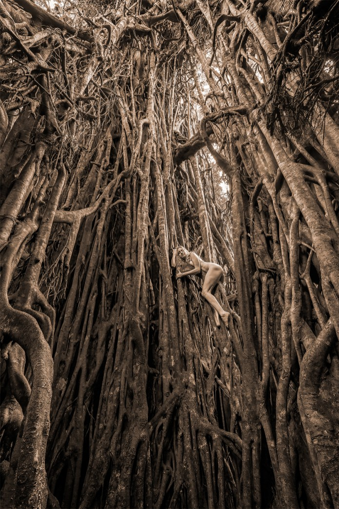 cathedral-fig-dryad-8-3-16-tkaweb