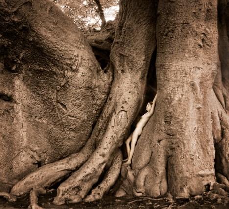 holboom-side-crp-treegirl-tkaweb