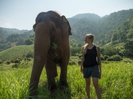 Chiang Mai - Elephant Nature Park Tour 4