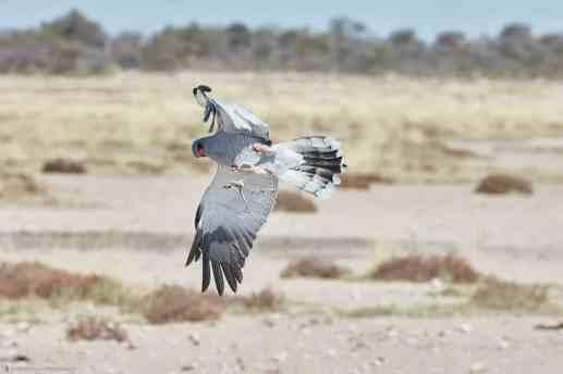 MBP_Namibia_20170617_5D25974-1440x960