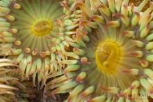 #2 - Sea Anemone
