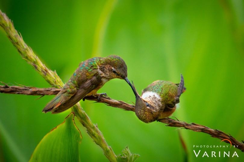 ©Varina Patel