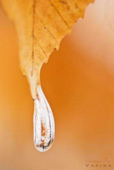 Frozen Droplet on Autumn Leaf - Ohio, USA