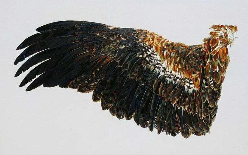 Emma Lindsay, Hunted Wedge Tailed Eagle