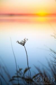 sunsetsilhouetteweb