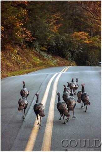 TurkeyGang2web