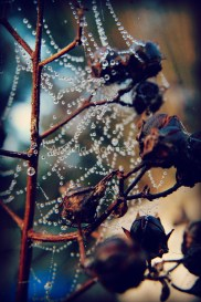 Dew Drops and Seeds