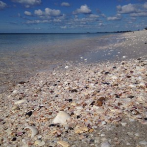 Shells on the beach at Casey Key