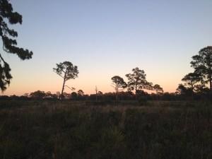 Florida scrub land - Oscar Scherer State Park