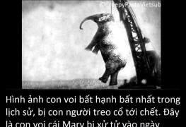 Hình ảnh con voi bất hạnh nhất trong lịch sử 5