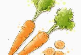Cắt cà rốt thành miếng à? 2019 5