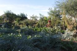 Le jardin du CIPA