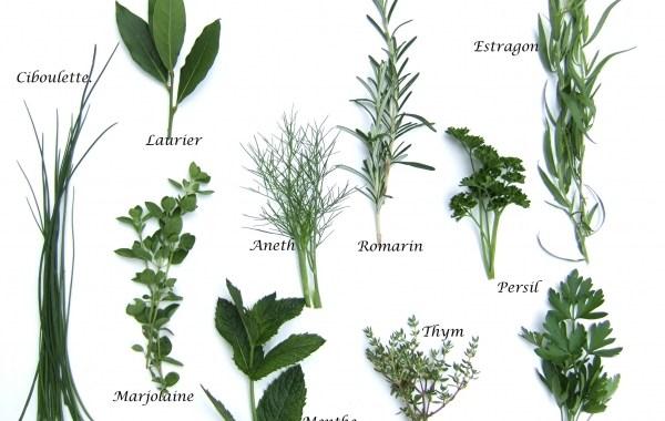 Formation Plantes aromatiques et médicinales