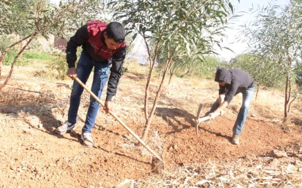 Pépinière : Les semis et la multiplication des plantes