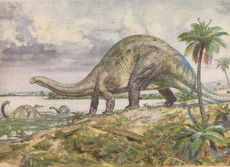 Image result for brontosaurus