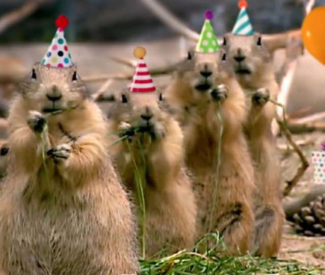 Prairie Dog Birthday Song Video Ecard Personalized Lyrics